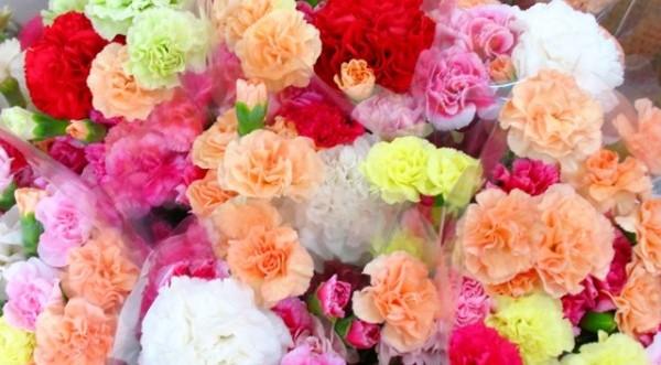 カーネーションの花言葉☆色選びで想いを伝える方法