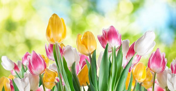 春の花のフラワーギフト☆香り高く可憐な7つの花々