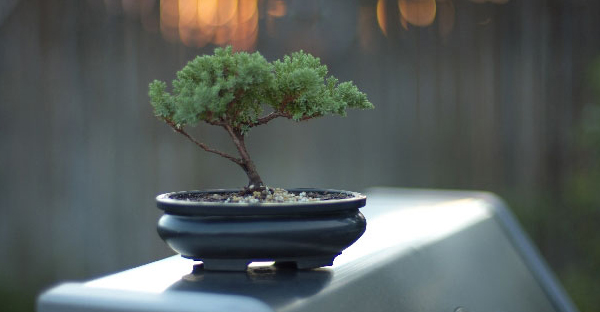 盆栽の育て方☆始めて挑戦する人におすすめの樹種