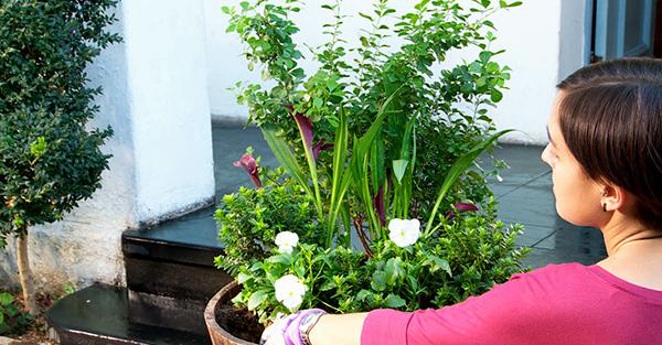 観葉植物に虫がついたら…。必見!プロが教える虫対策