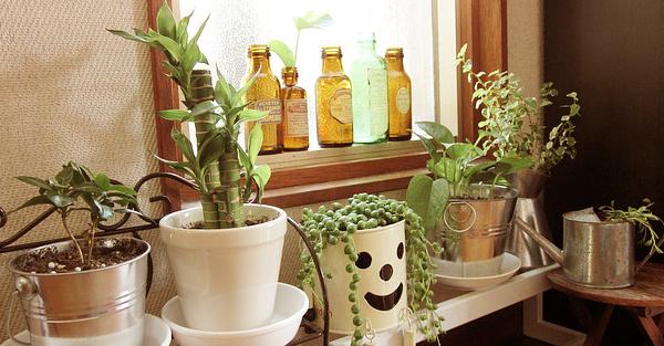 玄関を観葉植物で飾る☆お手入れ楽チン7つのおすすめ
