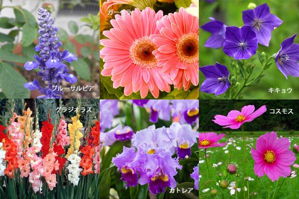 秋の花と花言葉☆誕生日ギフトに添えたい7つの花々