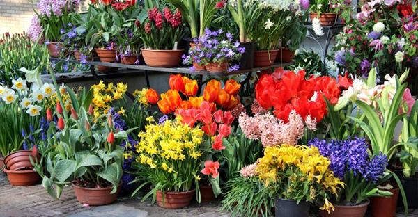 春の花のコンテナガーデン☆初心者も育てやすい花々