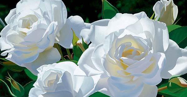 白薔薇の花言葉を贈るなら☆知っておきたい7つの知識