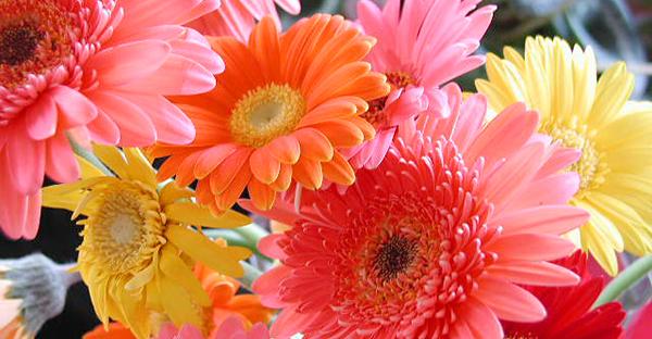 ガーベラの花言葉を添えて☆心ときめくメッセージ