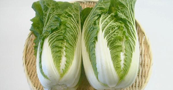 白菜の育て方☆プランターで育つミニハクサイに挑戦!