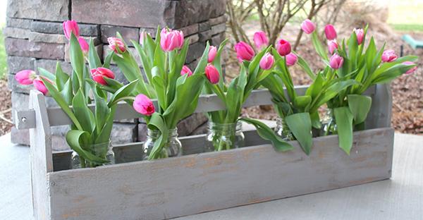 チューリップの植え方マスター☆可愛い花を咲かせるコツ
