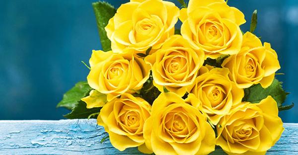 黄色いバラの花言葉☆恋人に贈る時に注意する理由とは