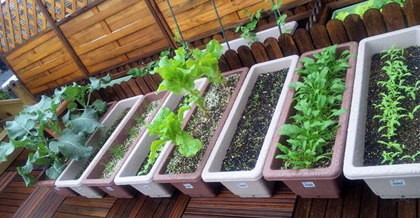 家庭菜園を簡単に始めちゃおう!超初心者におすすめの植物