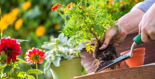 育てやすい花から始めるガーデニング☆おすすめ7つの花々