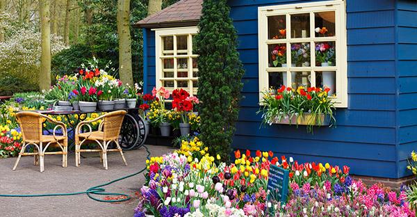 育てやすい花を選ぶ☆ズボラさんでも大丈夫!おすすめ植物