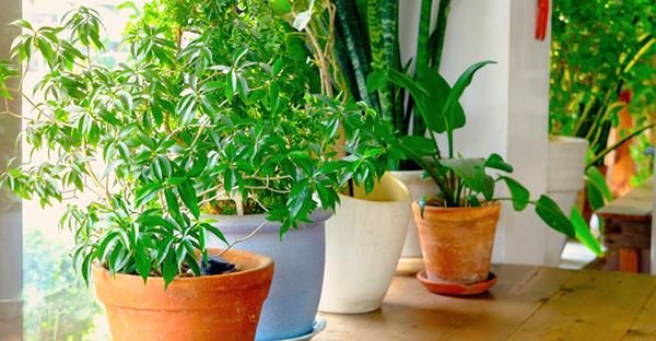 育てやすい観葉植物で緑を演出☆プロのおすすめとその理由