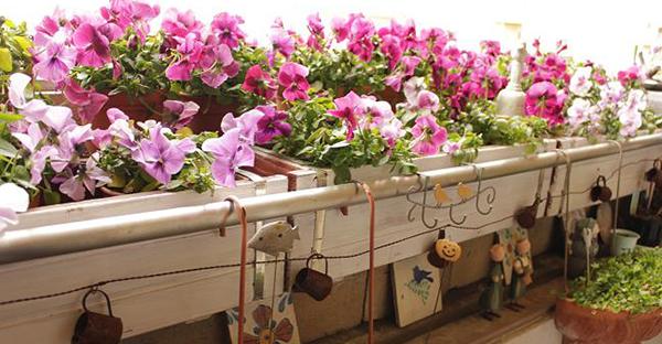 ガーデニング初心者でも大丈夫!植えっぱなしもOKの花々