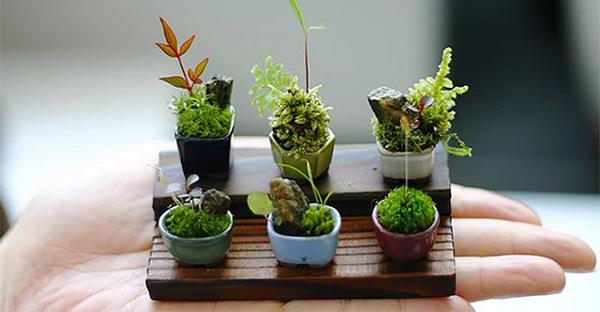 盆栽の育て方☆最近人気の「ミニサイズ」を楽しむポイント