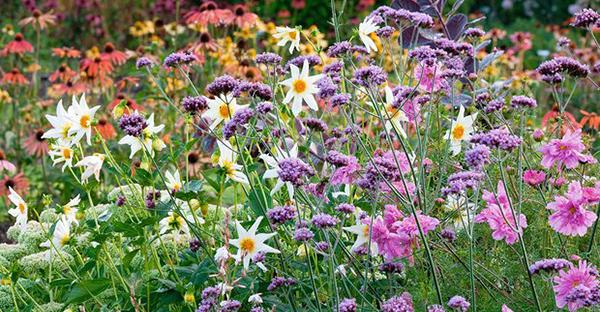 秋の花から始めるガーデニング☆簡単手入れでおすすめの花