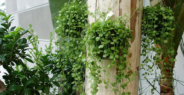 日陰で育つ植物☆室内にも飾れるおすすめ7つのインテリア