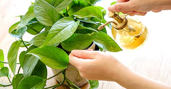 観葉植物の水やりポイント☆知っておきたい手入れの基本