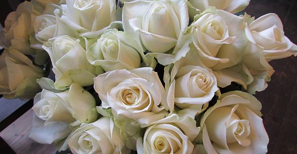 白薔薇の花言葉で愛を伝える☆ブーケとして愛される理由