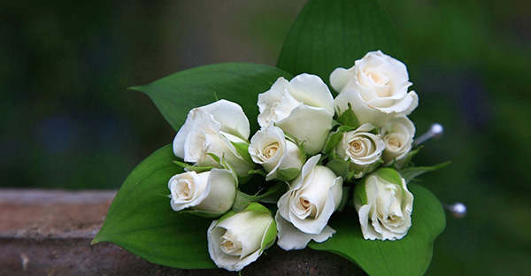 白いバラの花言葉を贈る時☆赤いバラと違うメッセージとは