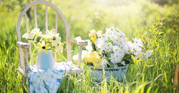 秋の花が彩るガーデニング☆初めてでも育てやすい7つの花