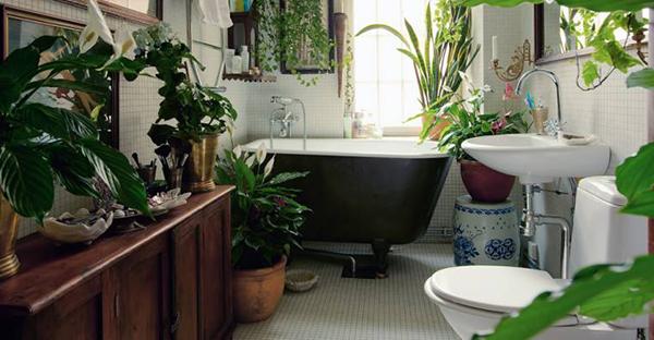 トイレに観葉植物で運気アップ☆日陰に強い7つのおすすめ