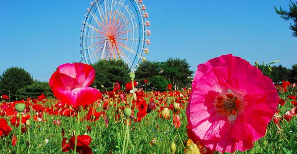 秋に咲く花から始める庭作り☆色鮮やかなおすすめの花々