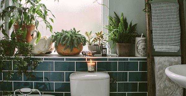 トイレの観葉植物が人気☆おすすめグリーンと、その理由