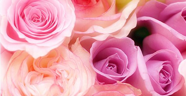 10月の花贈り☆大切な人へ気持ちを伝える7つの誕生花