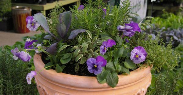 冬の花の寄せ植え☆玄関を彩る、おすすめ7つの組み合わせ