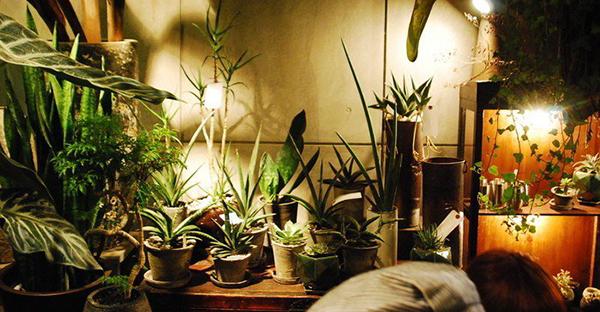 観葉植物の種類☆飾り方や置き場所で選ぶ、7つのおすすめ