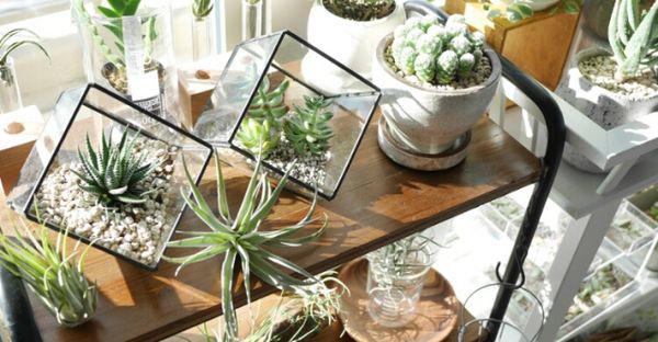 室内で植物を育てる☆日陰に強くて丈夫!7つの植物