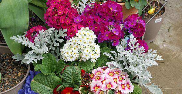 冬の花でカラフルな庭!ビタミンカラーが映える可愛い花々