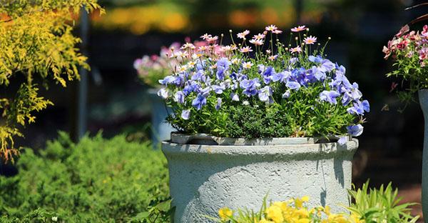 冬の花でお家を彩る☆玄関に飾る、鉢植えおすすめの花々