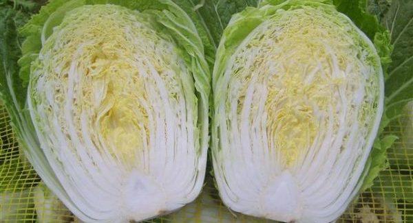 白菜の育て方と栽培に必要な5つのコツ