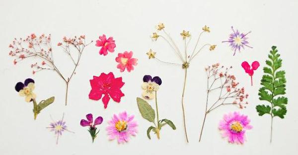 押し花の簡単な作り方☆1日でできちゃう7つの手順