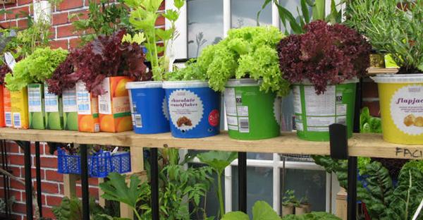ベランダ菜園、事始め☆最初に揃える道具と、環境づくり