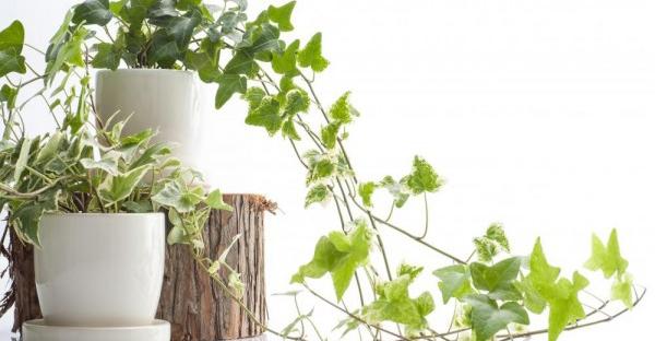 観葉植物の種類☆一鉢で変身!おしゃれさんに人気の品種