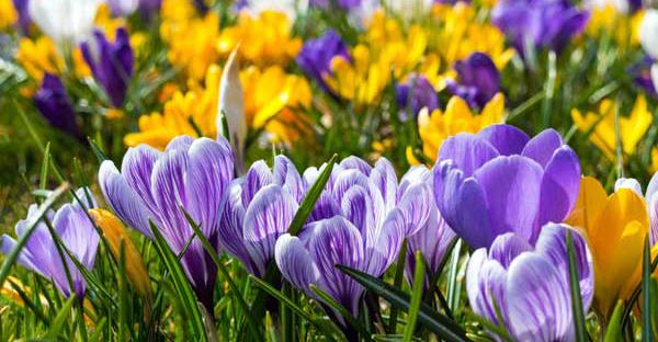 2月の誕生花を贈る☆素敵なメッセージを持つ7つの花々