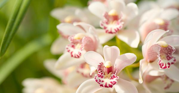 冬の花と暮らす☆手入れも簡単!鉢植えで育てる7つの花々