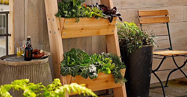 家庭菜園初心者でも大丈夫☆スムーズに始める7つの手順