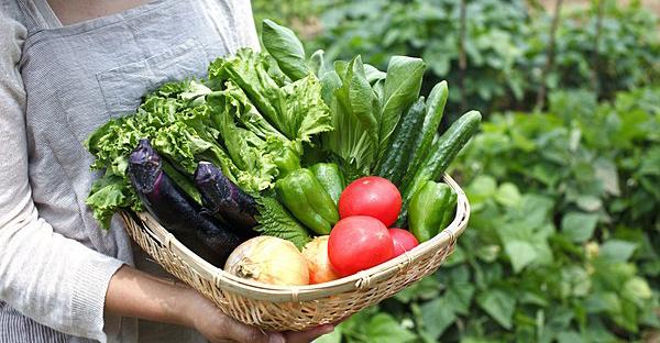 家庭菜園初心者におすすめ!一年目に挑戦したい野菜とは