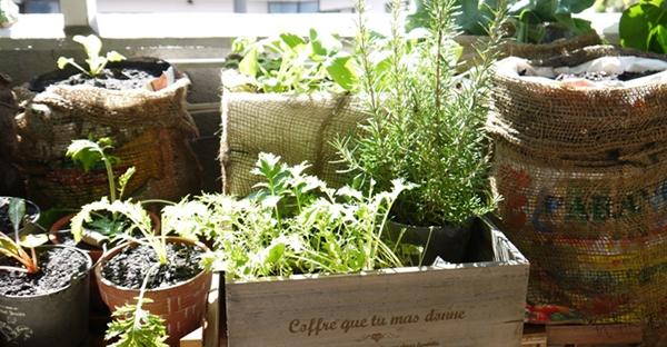 ベランダ菜園を始めよう!初心者におすすめ、7つの野菜