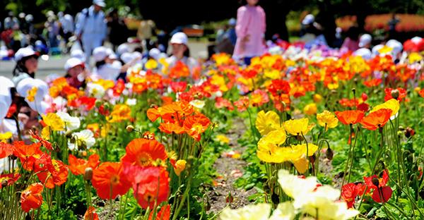 四季の花を楽しむ☆日本の季節を彩る7つの花々