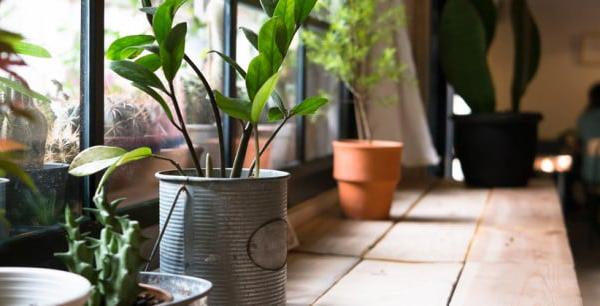 観葉植物の育て方☆室内で長く楽しむ、7つの基礎知識