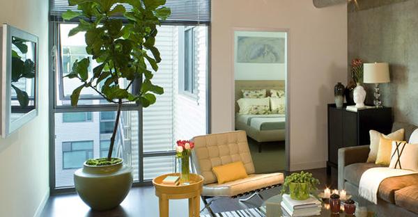 室内の観葉植物で気分上々☆癒しに効果!7つのおすすめ