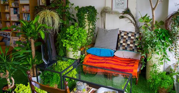 室内の観葉植物☆場所別で選ぶ、おすすめの種類