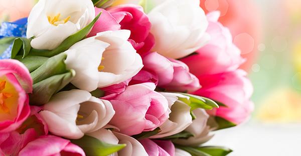 3月の誕生花でお祝い☆メッセージで選びたい7つの花々