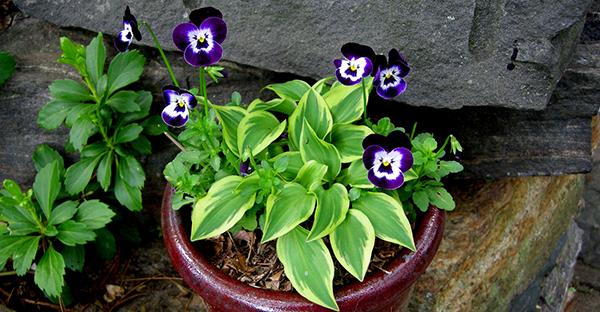 日陰の花なら元気に育つ☆おすすめ植物と育て方のコツ