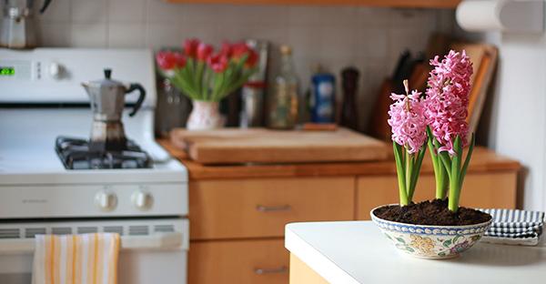 日陰の花で室内も華やか☆飾る場所別、7つのおすすめ