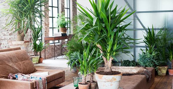 室内の観葉植物☆枯らさず育てる7つのポイント